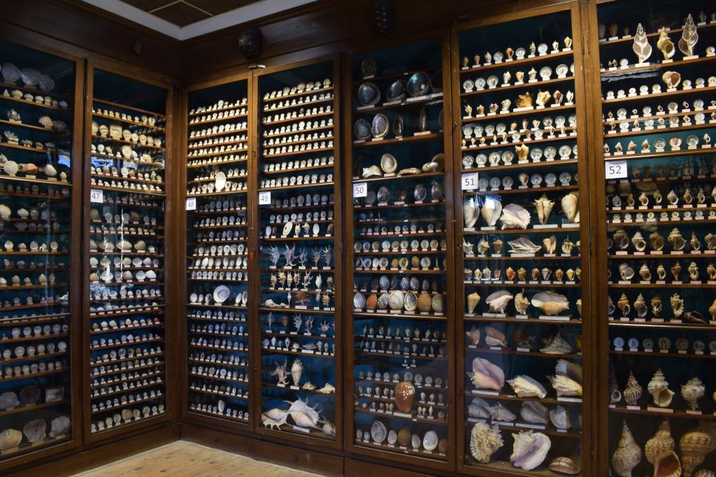 Vitrine de coquillages musée Dupuis
